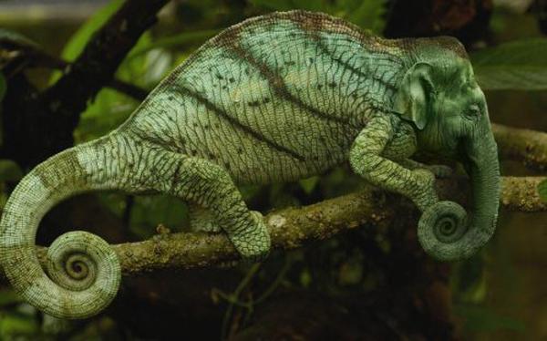 Elemeleon