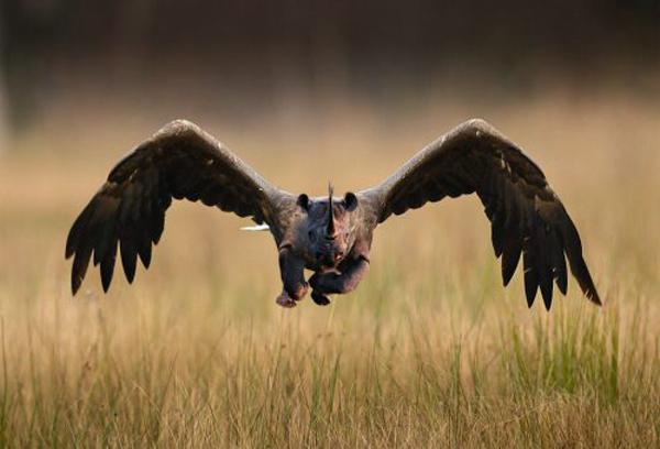 Hawkoceros