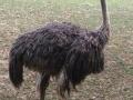 Awwstrich