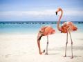 Flamingant