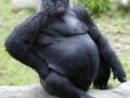 Lowland Pugrilla