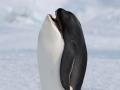 Whaleguin