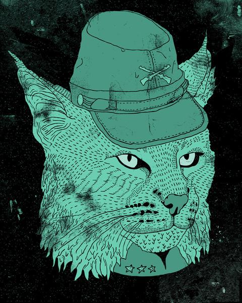 bobcat-south