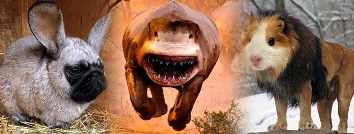 hibrid-hayvanlar-banner
