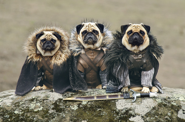 pugs-of-westeros-1