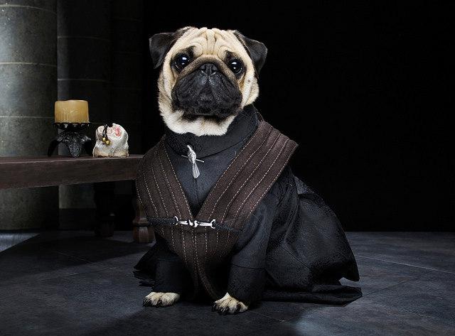 pugs-of-westeros-4