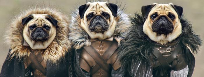 pugs-of-westeros